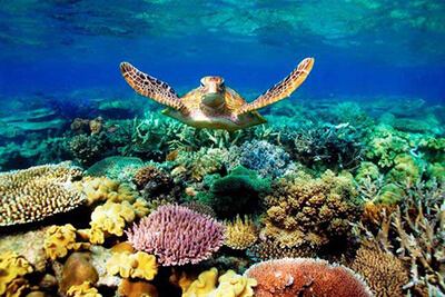 AUS NZ greatbarrierreef